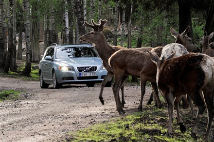 VOLVO CAR CORPORATION DEVELOPPE UNE TECHNOLOGIE D'EVITEMENT DE COLLISIONS AVEC LE GRAND GIBIER