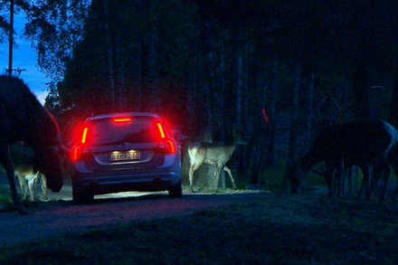 Video that shows how Volvo Car Corporation develops technology to avoid collisions with wild animals (2:28), with sound